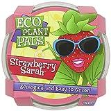 DuneCraft Strawberry Sarah Science Kit