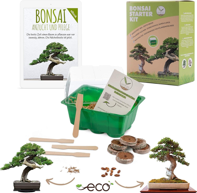 Bonsai Kit incl. eBook GRATUITO - Set de plantas con mini invernadero, semillas y suelo - idea de regalo sostenible para los amantes de las plantas (Semillas: Olivo + Pino Australiano)