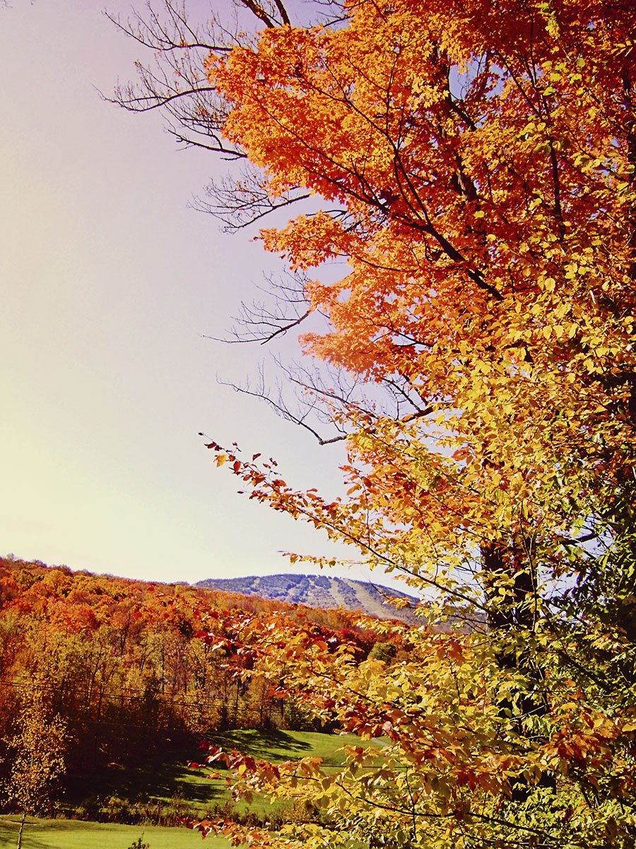 Canvas Only Print 8.75x6.5 Unframed Frame USA Vegas Autumn-CELKEL112089 8.75x6.5 by Celia Kelly in a Un