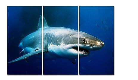 Amazon.com: Natural art - Big Shark Prints, Fish Prints Art ...