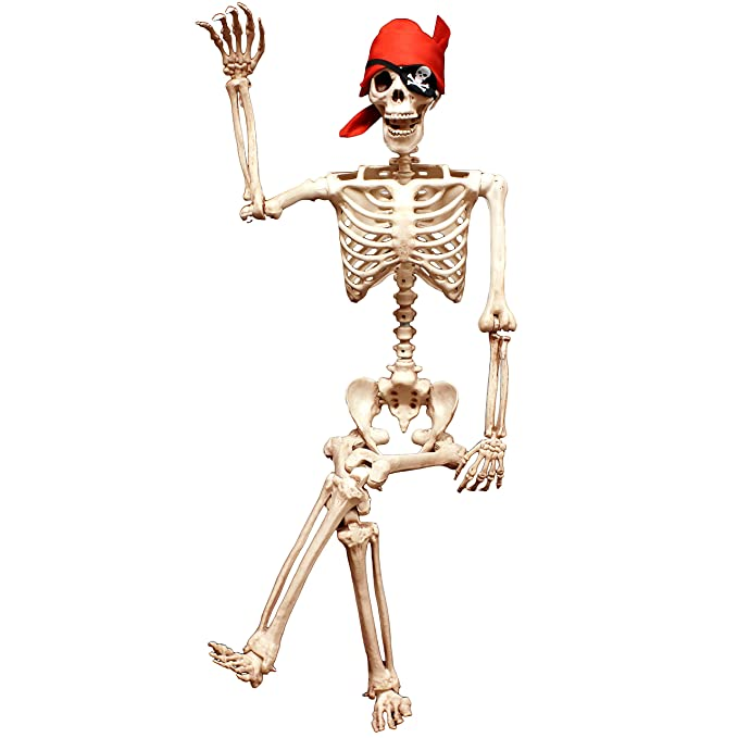 Amazon 5 Ft Pose N Stay Life Size Skeleton Full Body Realistic
