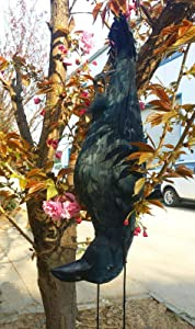 Zilin Plastic and Feathered Dead Crow Decoy GET RID of Crows,Bird Scaring,Size: 58x18x14 cm,Ship from The USA!