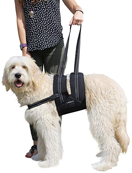de47eb9bf7 Labra Veterinarian Approved Dog Canine K9 Sling Assist with Chest Strap  Adjustable Reflective Straps Support Harness