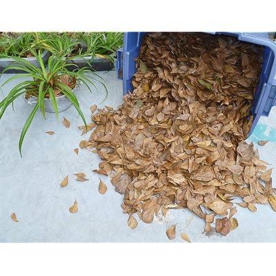 Gallon Bag Mid-Air Catch Oak Leaf Litter Terrarium Dart Frog Vivarium Leaf #GTHAP : Garden & Outdoor
