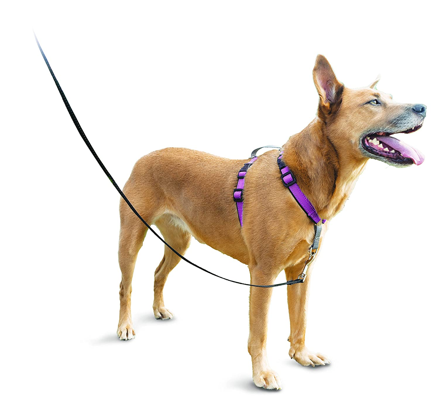 PetSafe 3in1 Harness, from The Makers of The Easy Walk Harness, Fully Adjustable No-Pull Dog Harness Toys & Behavior 3IN1-M-TEAL