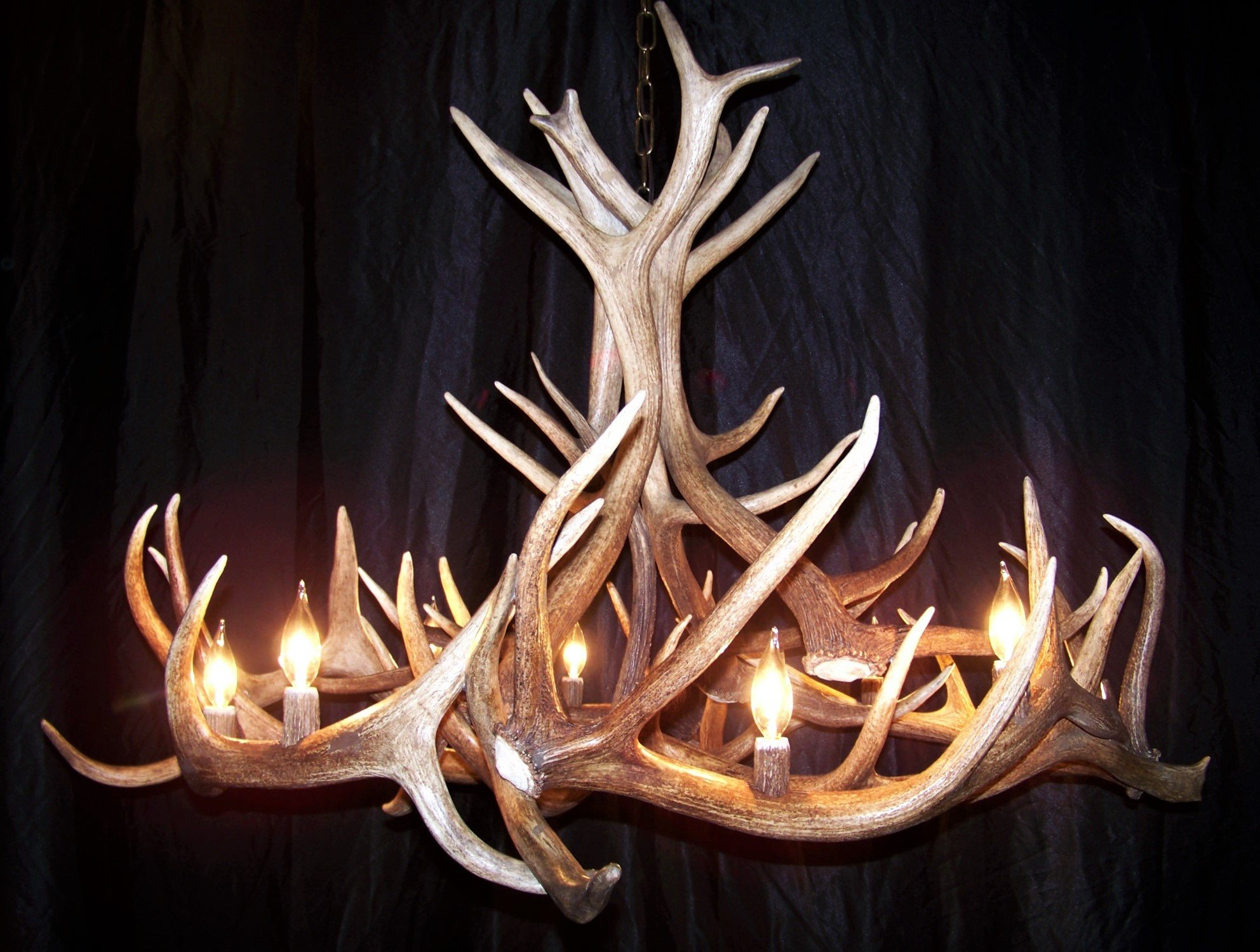 REAL ELK ANTLER CHANDELIER, 8 LIGHTS, SHED ANTLER ART, ELK ANTLER COVERED SOCKETS HANDMADE, LARGE, 45'' WIDE x 30'' TALL