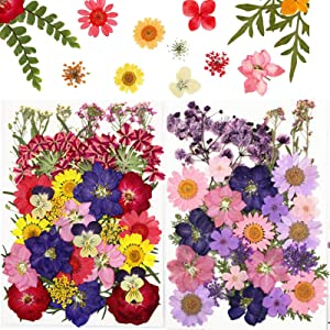 60 PCS Real Pressed Dried Flowers for Crafts - Colorful Pressed Flowers Daisies Real Dried Flowers Leaves Petals for DIY Candle Jewelry Nail Pendant Crafts Making Art Decors
