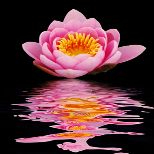 Amazon.com: Lotus Flower Live Wallpaper: Appstore For Android