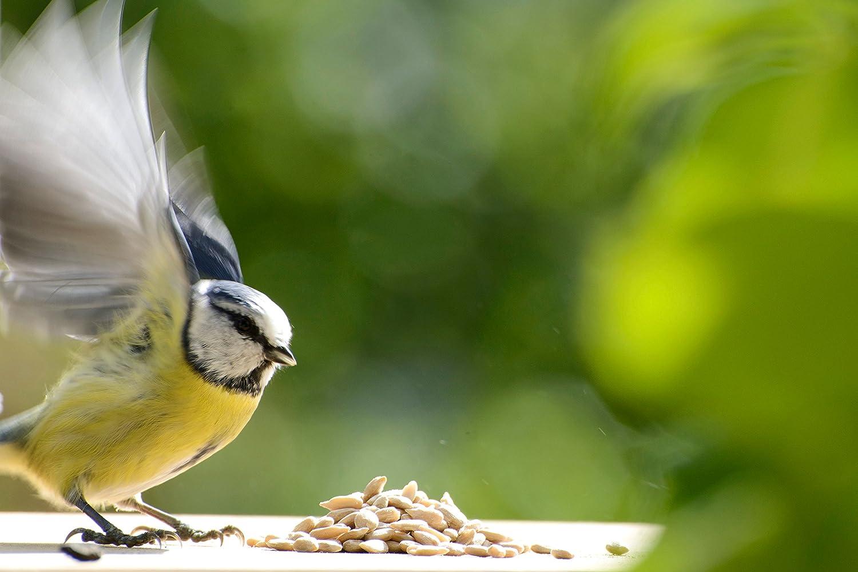 1 x 20 kg 1er Pack dobar Sonnenblumenkerne Vogelfutter-Beutel ganzj/ähriges Wildvogelfutter zum Streuen