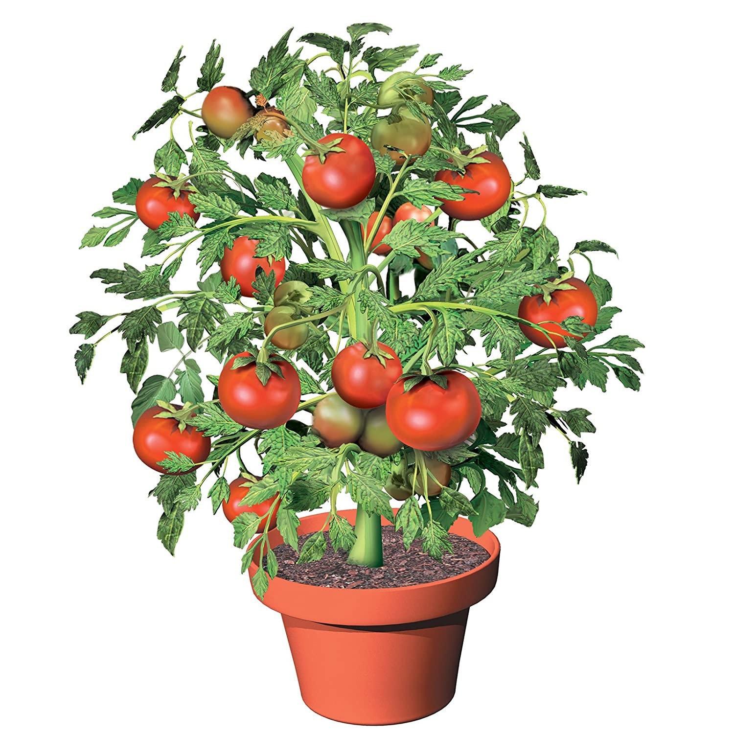 Amazon Grow Your Own Flower Pot Tomatoes set of 3 Garden