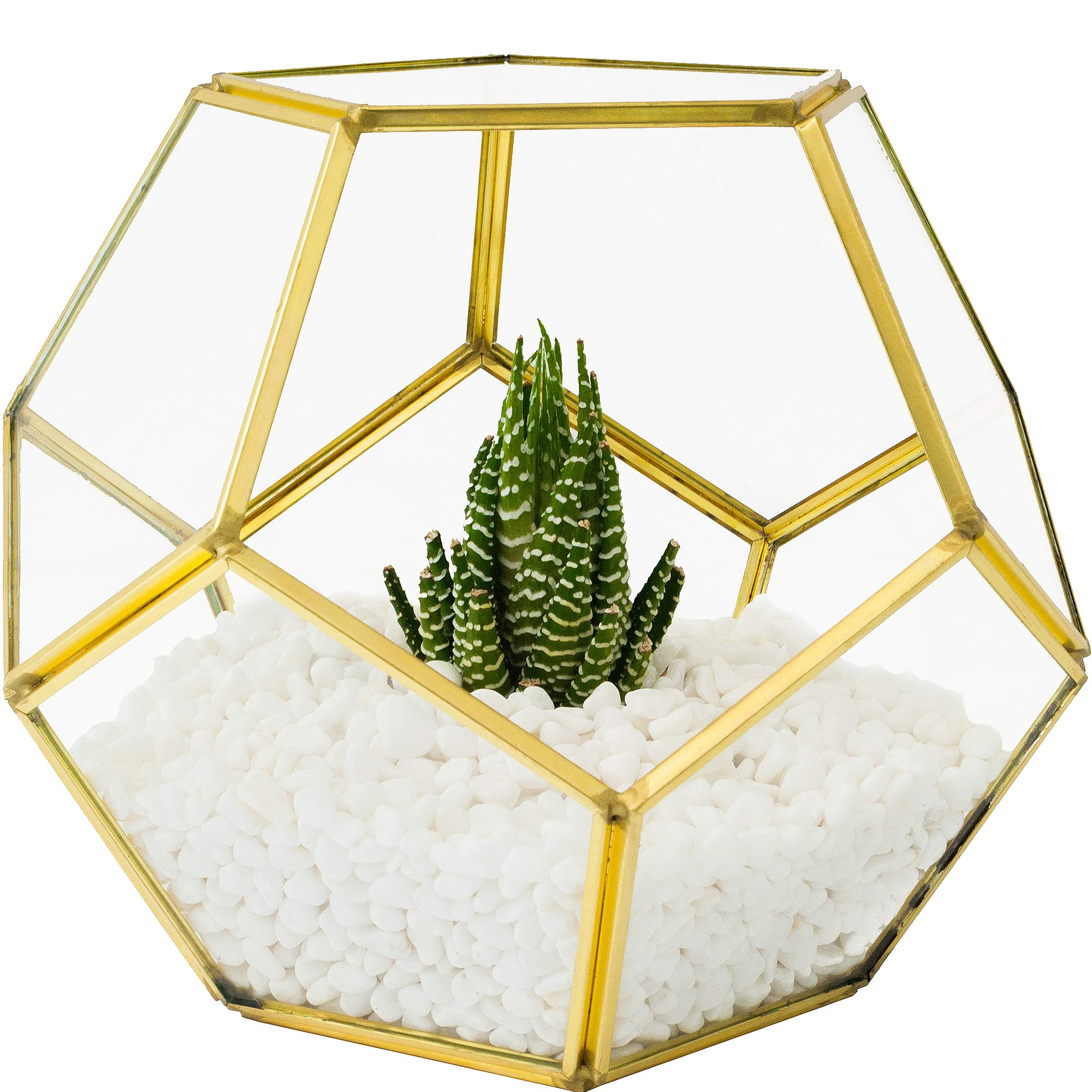 MOCTUS Glass Geometric Terrarium - Succulent Planter - Brass Container Box for Garden/Outdoor/Indoor/Home Decoration, Wedding Gift - Gold Pentagon Sphere Pot Holder for Display/Tabletop/Desktop by MOCTUS