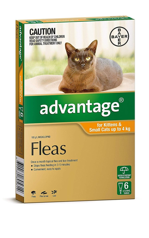 Advantage Pet Meds Cat 4Kg orange 6
