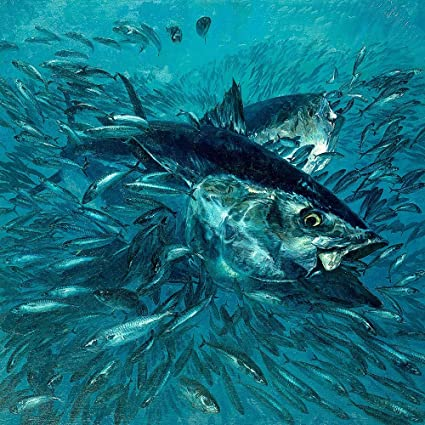 Bluefin Tuna Wallpaper Wall Mural - Self-Adhesive - Multiple Sizes - National Geographic Image from Magic Murals - Wall Decor Stickers - Amazon.com