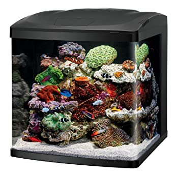 Best fish tanks reviews top picks 2018 update for Bio cube fish tank