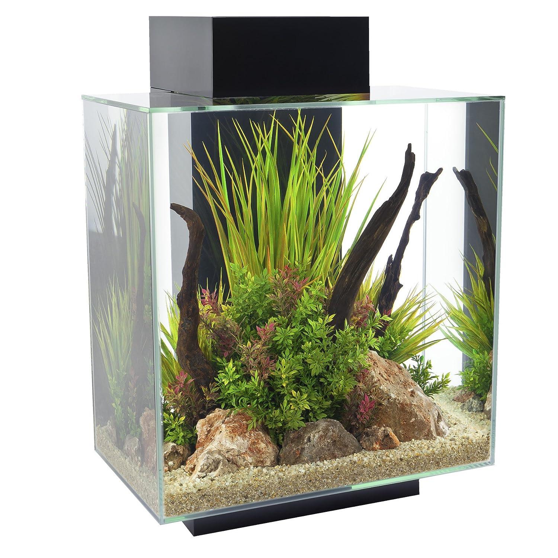 Buy fish for aquarium online bangalore - Amazon Com Fluval Edge 12 Gallon Aquarium With 42 Led Light Black Pet Supplies