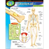 "Trend Enterprises The Human Body–Skeletal System Learning Chart (1 Piece), 17"" x 22"""