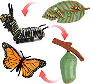 UANDME 4pcs Butterfly Life Cycle Kit Lifestyle Stages of Monarch Butterfly Teaching Tools for Kids, Students