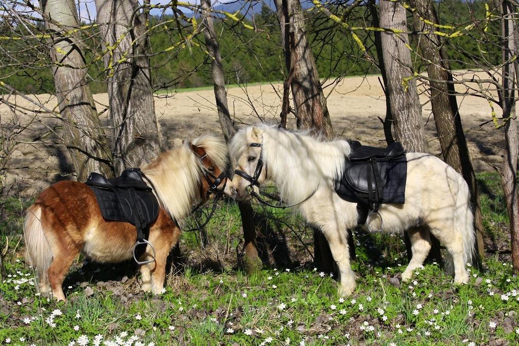 Mini minishetty Minishetty 8 Zoll Sattel auch Holzpferd Ponysattel Minipferd Falabella Satrel SET incl. Zubehör SUPER KLEIN !!Falabella