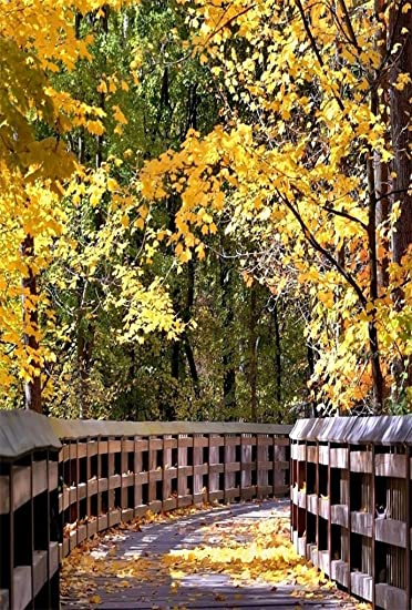Amazon Com Aofoto 5x7ft Road In Autumn Woods Backdrop For Photography Outdoor Fall Nature Scenery Forest Park Boardwalk Yellow Leaves Background Photo Studio Props Lovers Adult Girl Boy Man Portrait Wallpaper