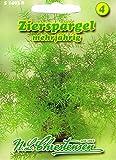 Zierspargel Asparagus densiflorus mehrjährig