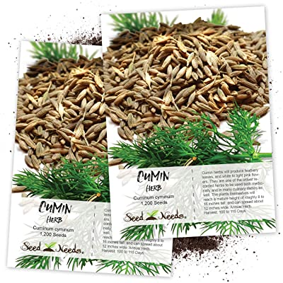 Seed Needs, Cumin Herb (Cuminum cyminum) Twin Pack of 1, 200 Seeds Each Non-GMO : Herb Plants : Garden & Outdoor