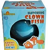 Growing Hatching Clown Fish