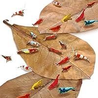 JOR Shrimp Indian Almond Leaves, Supplemental Shrimp Diet, Provide Shelter and Food, Additional Source of Energy…