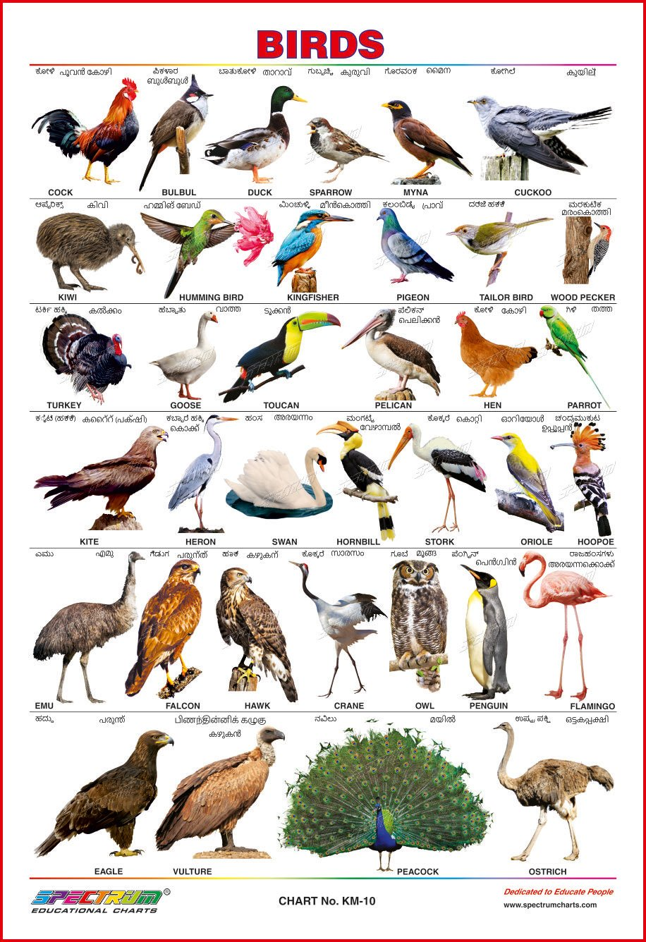 Spectrum Educational Wall Charts Set Of 4 Kannada Malayalam Animals Birds Fruits Vegetables Amazon In Office Products