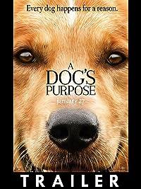 Amazon Prime A Dog S Purpose