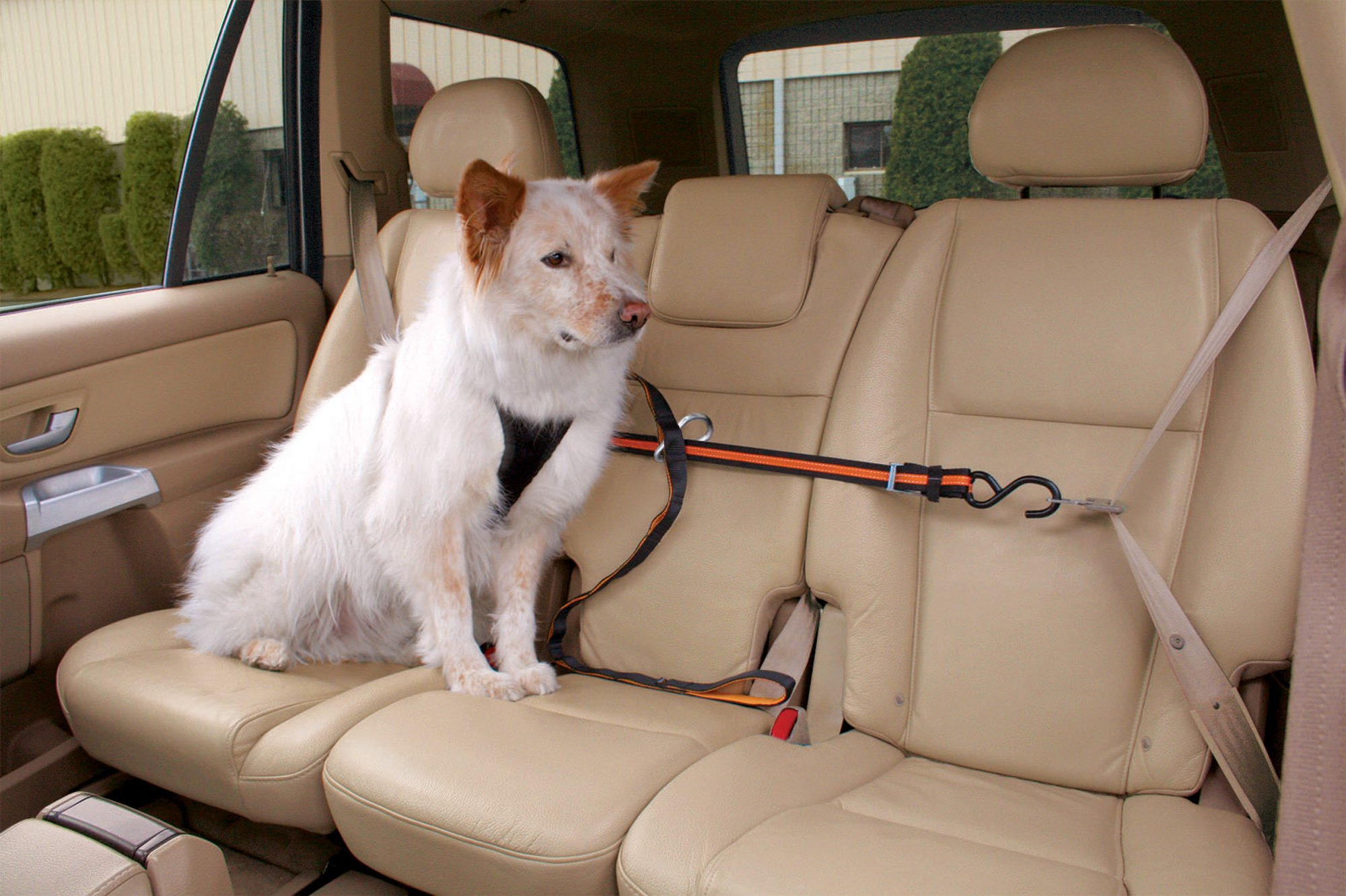Kurgo Zip Line With Dog Leash And Carabiner