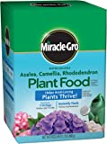 Miracle-Gro Plant Food for Azaleas, Camellias, and Rhododendrons, 1.5-Pound (Fertilizer for Acid Loving Plants)