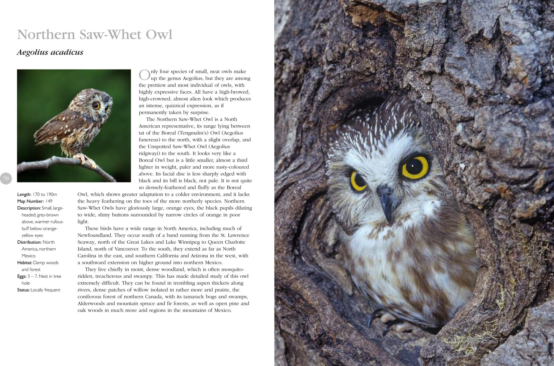 The Complete Book of North American Owls by Perseus Books Group