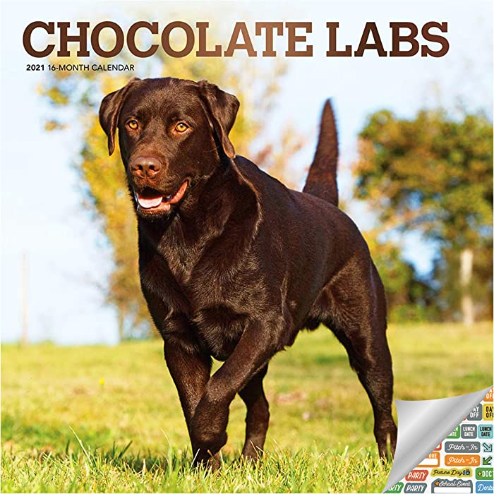 Chocolate Labrador Retrievers Calendar 2021 Bundle - Deluxe 2021 Chocolate Labs Wall Calendar with Over 100 Calendar Stickers (Dog Lovers Gifts, Office Supplies)