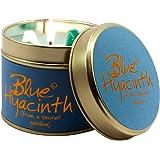 Lily Flame Hyacinth Tin, Blue