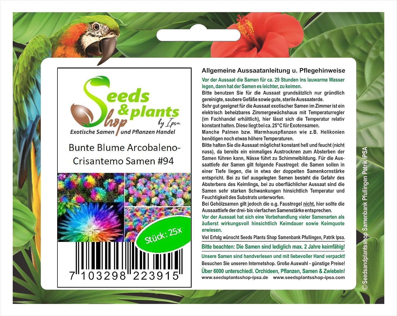 25 flor colorida flor del jardín de la planta de Arcobaleno Crisantemo semillas #94: Amazon.es: Jardín