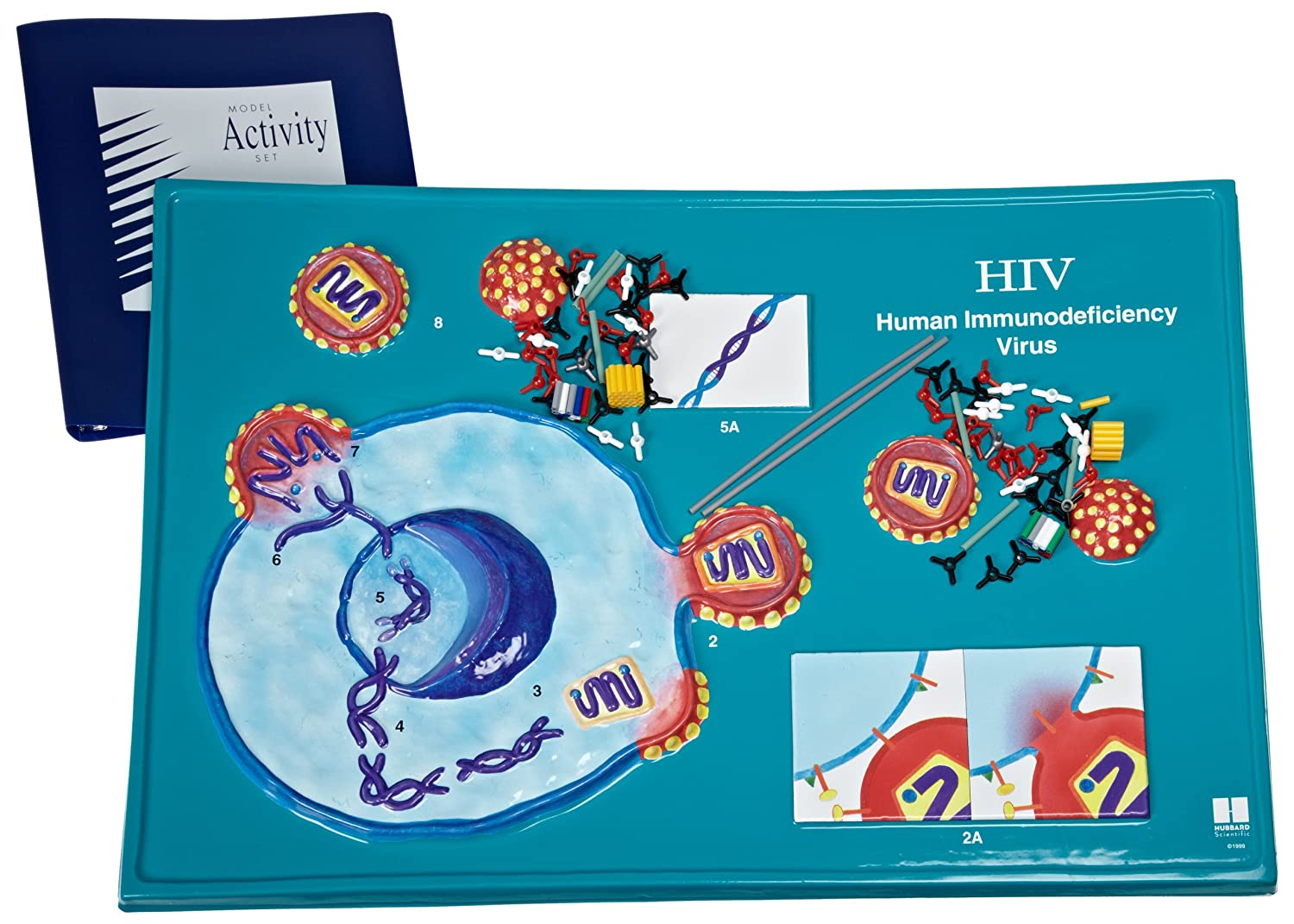 Amazon American Educational Hiv Model Activity Set Industrial