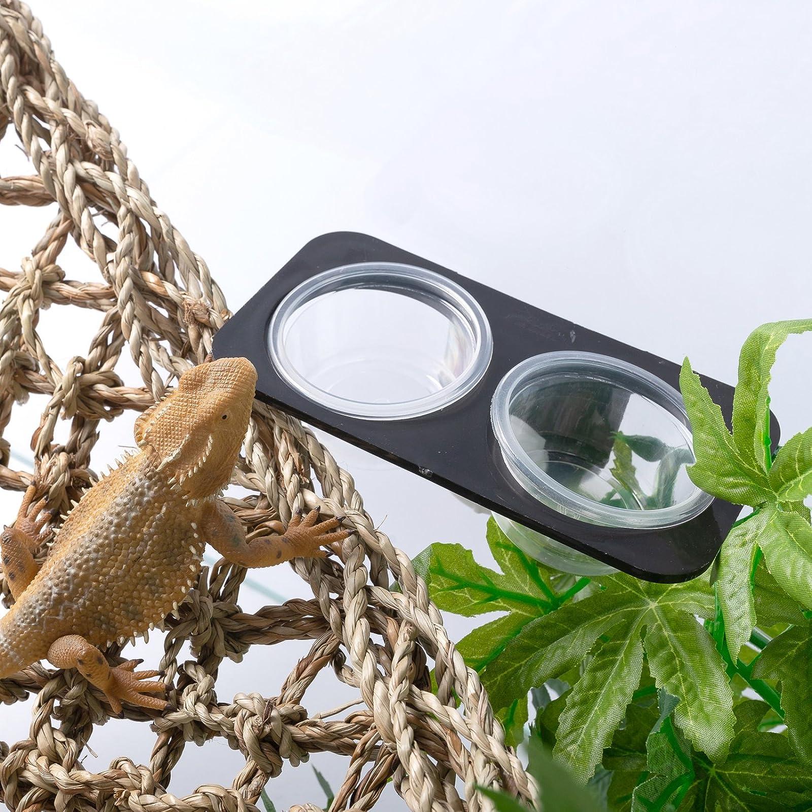 SLSON Gecko Feeder Ledge Acrylic Suction Cup - 6