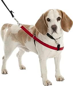 Company of Animals Walkezee.: Amazon.es: Productos para mascotas
