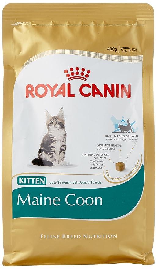 ROYAL CANIN Kitten Maine Coon - Comida para gatos (0,4 kg)
