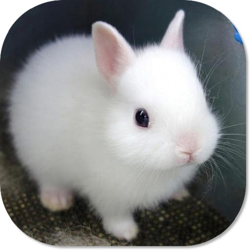 Cute Bunny HD Wallpapers ()