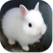Cute Bunny HD Wallpapers
