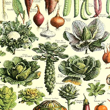 Amazon.com: Vintage Poster Print Art Kitchen Vegetable Identification Reference Chart Botanical Science Plant Carrot Pumpkin Potato Wall Decor (15.75 x ...
