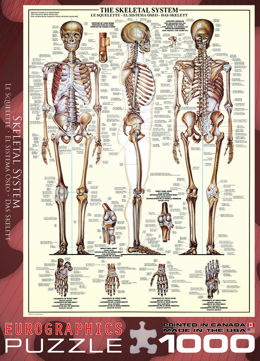 Amazon Eurographics Skeletal System Chart Puzzle 1000 Piece