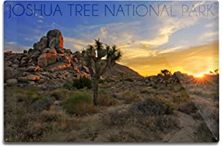 product image for Lantern Press Joshua Tree National Park, California - Sunrise 68516 (6x9 Aluminum Wall Sign, Wall Decor Ready to Hang)