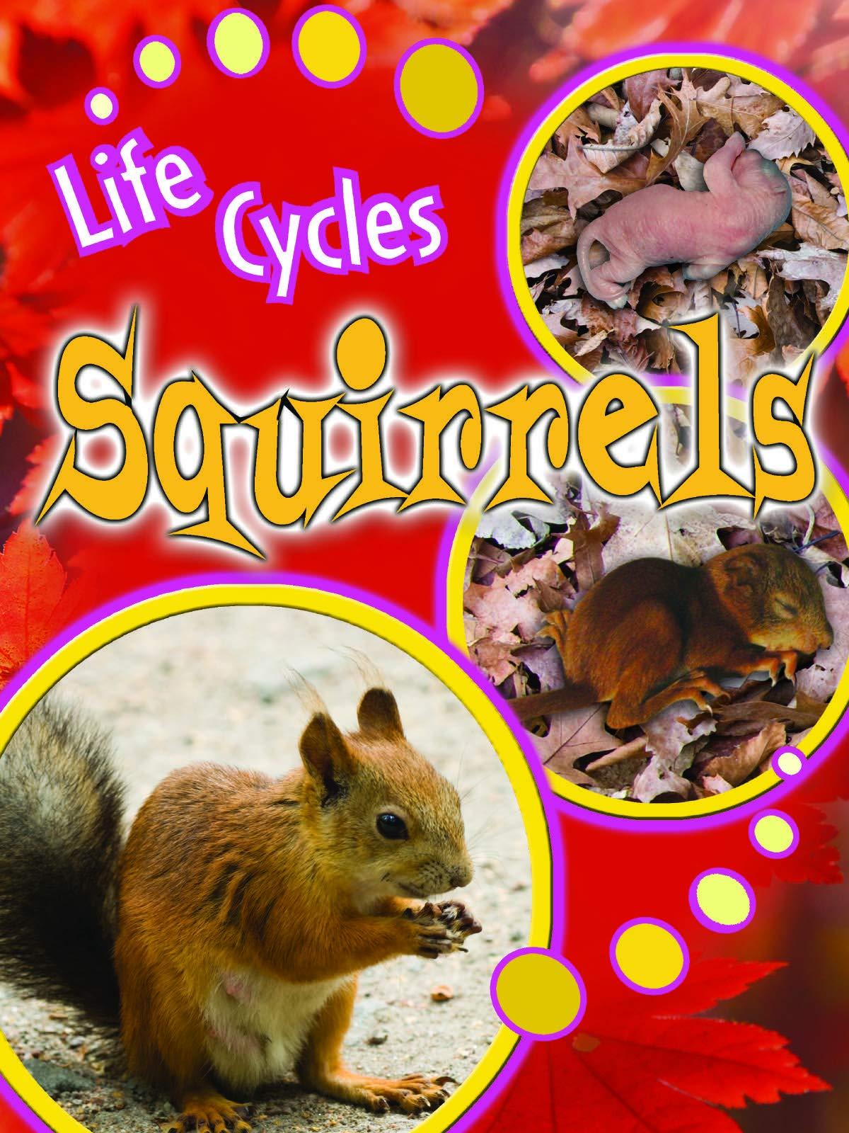 Squirrels Paperback – Sep 9 2011 Julie K Lundgren Rourke Publishing 1615905499 TCR905492