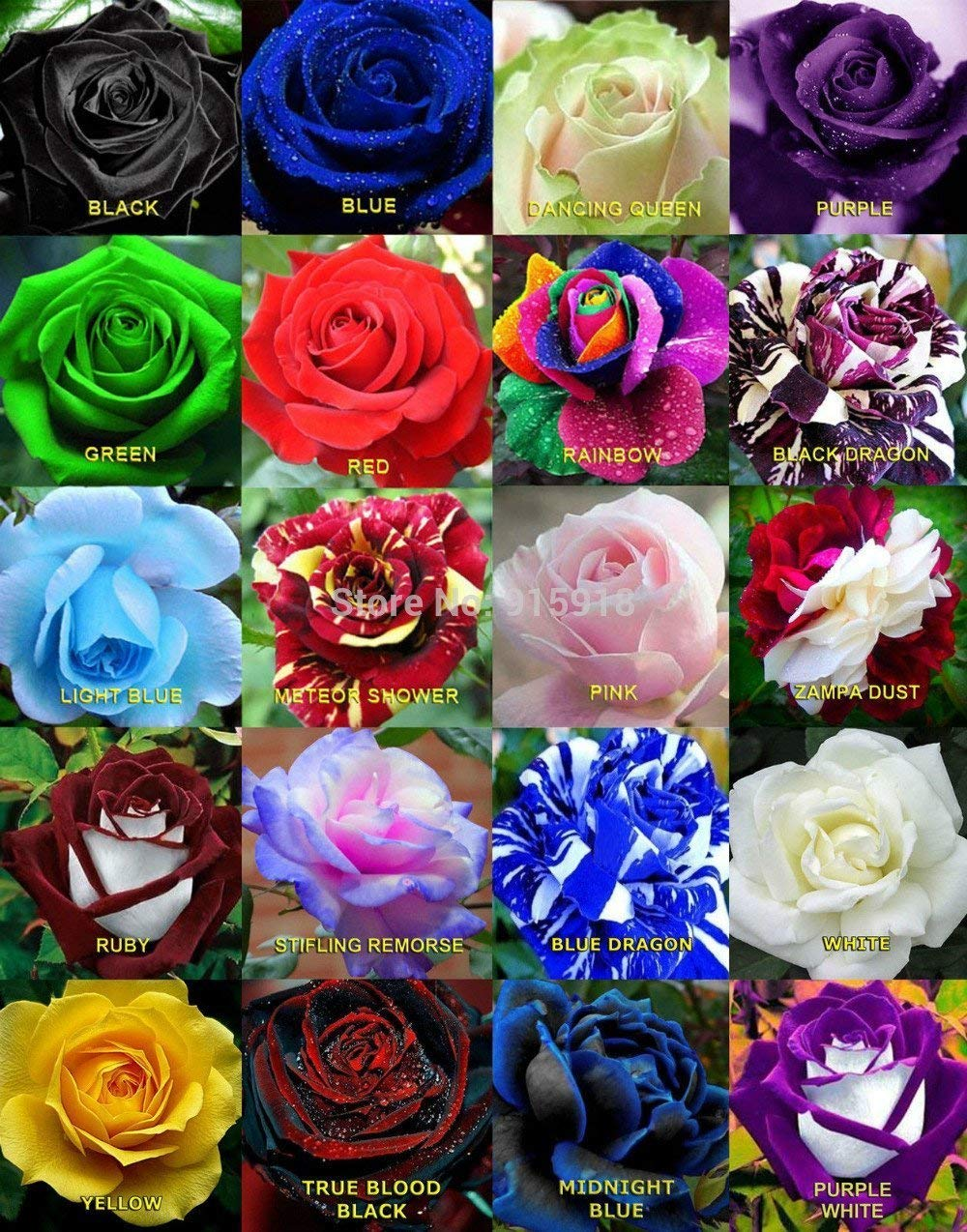 All color rose flower images