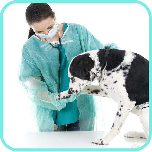 Dog Seizures Treatment