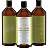 Calily Life Organic Tea Tree Shampoo + Conditioner with Dead Sea Minerals, Duo Set, 33. 8 Oz. Each – Refreshes, Removes Impurities, Softens & Invigorates - Promotes Hair Growth Naturally - [ENHANCED]