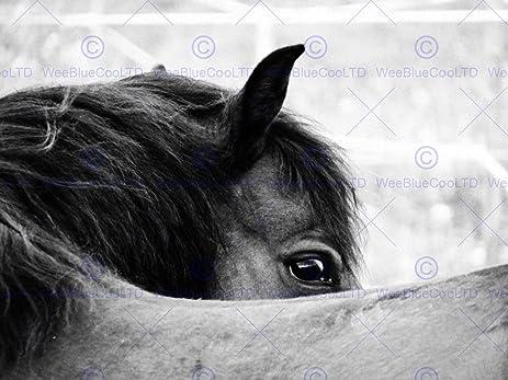 Photography animal black white horse mane eye art print 12x16 poster mp3254b