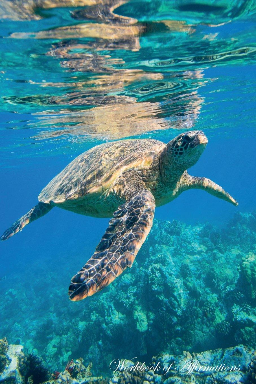 Read Online Green Sea Turtle Workbook of Affirmations Green Sea Turtle Workbook of Affirmations: Bullet Journal, Food Diary, Recipe Notebook, Planner, To Do List, Scrapbook, Academic Notepad ebook
